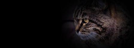 La cabeza del gato con el fondo negro Fotos de archivo libres de regalías