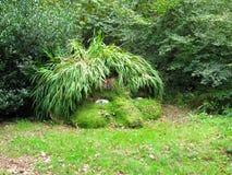 La cabeza del gigante, jardines perdidos de Heligan Foto de archivo