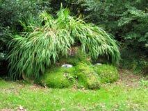 La cabeza del gigante, jardines perdidos de Heligan Imagen de archivo