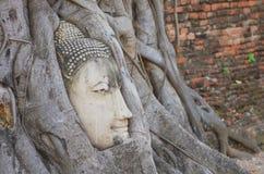 La cabeza del ` s de la imagen de Buda en el árbol arraiga imágenes de archivo libres de regalías