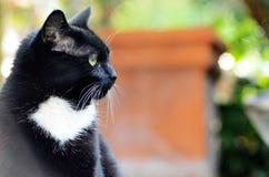 La cabeza lateral del gato negro tiró el exterior en el fondo del patio fotografía de archivo