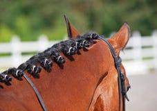 La cabeza y el cuello de un caballo de bahía Fotos de archivo libres de regalías