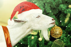 La cabra blanca adorna el árbol de navidad Foto de archivo