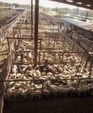 La cabra y las ovejas subastan el corral en Fredericksberg, Tejas fotos de archivo