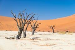 La cacerola escénica de Sossusvlei y de Deadvlei, de la arcilla y de la sal con los árboles trenzados del acacia rodeados por las Imagenes de archivo
