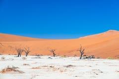 La cacerola escénica de Sossusvlei y de Deadvlei, de la arcilla y de la sal con los árboles trenzados del acacia rodeados por las Imagen de archivo