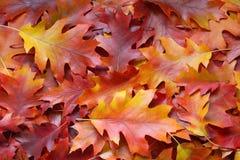 La caída deja el fondo - fotos comunes Foto de archivo libre de regalías