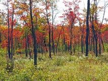 La caduta colora Berkshires mA Fotografia Stock