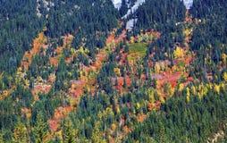 La caduta colora i lati Forest Stevens Pass Washington della montagna fotografia stock libera da diritti