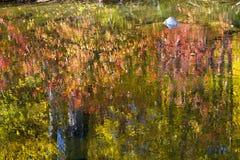 La caduta colora l'estratto di riflessioni del fiume Immagini Stock