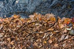 La caduta colora le foglie e l'acqua Fotografia Stock Libera da Diritti