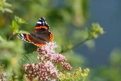 La caduta della farfalla un oot di Fotografia Stock
