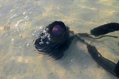 La caduta della macchina fotografica di DSLR all'acqua di mare Immagini Stock