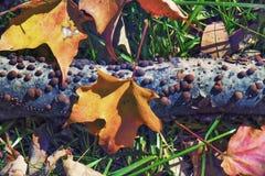 La caduta della natura colora il fondo Fotografie Stock Libere da Diritti