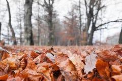 La caduta di autunno copre di foglie sulla terra in un parco Fotografia Stock