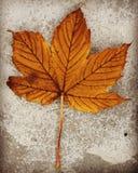 La caduta di autunno della foglia lascia l'arancia Immagine Stock Libera da Diritti