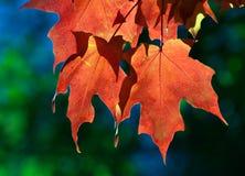 La caduta di autunno lascia 4 fotografia stock