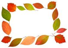 La caduta di autunno lascia il blocco per grafici Immagine Stock