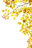 La caduta dorata lascia il bordo naturale Immagini Stock