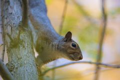 La caduta e gli scoiattoli sono inseparabili Fotografia Stock