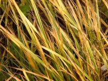 La caduta erba il primo piano Fotografia Stock