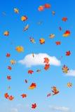 La caduta ha colorato i fogli che cadono sulle nubi del cielo blu Fotografia Stock Libera da Diritti