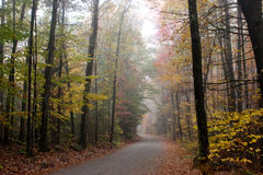 La caduta lascia in una foresta giù una strada non asfaltata Fotografie Stock