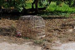 La cage Image libre de droits