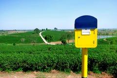 La caja amarilla de los posts está situada en la plantación de té, Chiang Rai, Th Fotos de archivo