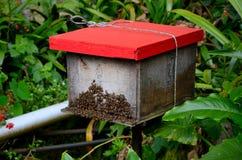 La caja de madera roja con las abejas de la miel a crear para la miel y la abeja enceran a Cameron Highlands Malaysia Imágenes de archivo libres de regalías