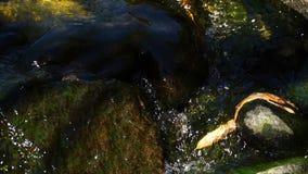 La cala cubierta de musgo en naturaleza y naturaleza almacen de metraje de vídeo