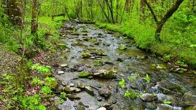 La cala del bosque que corría sobre musgo cubrió rocas Paisaje del resorte metrajes