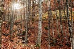 La cala en el bosque fluye de arriba hacia abajo luz del sol del fondo Imagen de archivo