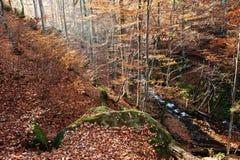 La cala en el bosque fluye de arriba hacia abajo luz del sol del fondo Imágenes de archivo libres de regalías