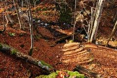 La cala en el bosque fluye de arriba hacia abajo luz del sol del fondo Foto de archivo