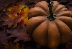 La calabaza anaranjada de la textura se coloca en las hojas de Borgoña, púrpuras y amarillas foto de archivo
