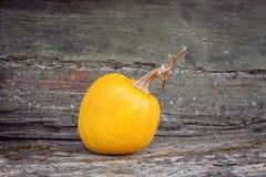 La calabaza anaranjada miente en banco Fotos de archivo