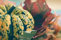 La calabaza y todavía seca vida de las hojas Fotos de archivo