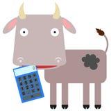La calculadora de la vaca Imágenes de archivo libres de regalías