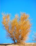 La Californie Sagebrush Images libres de droits