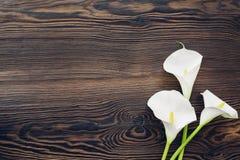 La calla blanche fleurit sur le fond en bois, vue supérieure L'espace vide pour le texte photographie stock