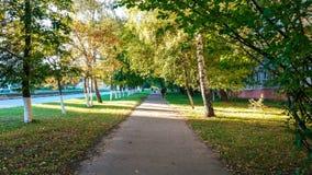 La calle del otoño, salta la ciudad verde del asfalto del camino de los árboles, árboles de abedul por la tarde Fotografía de archivo libre de regalías