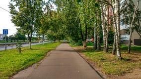 La calle del otoño, salta el asfalto verde en la ciudad, árboles del camino de los árboles de abedul por la tarde Fotografía de archivo libre de regalías
