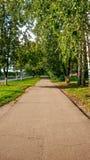 La calle del otoño, salta el asfalto verde en la ciudad, árboles del camino de los árboles de abedul por la tarde Foto de archivo libre de regalías