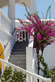 La calle en la isla griega Santorini Fotos de archivo libres de regalías