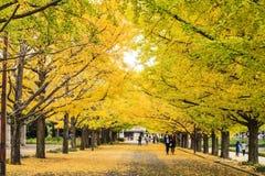 La calle Meiji Jingu Gaien próxima Imagen de archivo libre de regalías