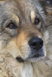 La calle presenta perros perdidos tristes Imágenes de archivo libres de regalías