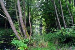 La calma del río imagen de archivo libre de regalías