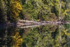 La calma perfetta del lago birkenhead vicino a Whistler e a Pemberton, BC crea le riflessioni gialle e verdi Fotografie Stock
