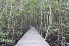 La calzada de madera en el bosque del mangle, el puente de madera en M Imágenes de archivo libres de regalías